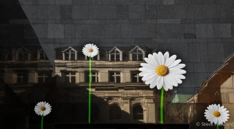 Daisies on the glass wall